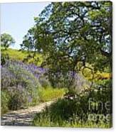 Peaceful Path Canvas Print