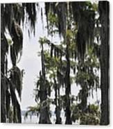 Peaceful Swamp Canvas Print