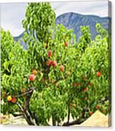 Peaches On Tree Canvas Print