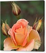 Peachy Canvas Print