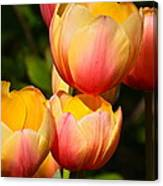 Peachy Tulips Canvas Print