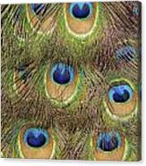 Peacock Feather Eyes Canvas Print