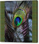 Peacock Feather Ll Canvas Print