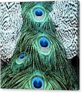 Peacock Plume Canvas Print