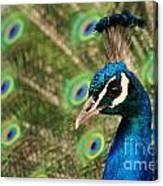 Peacock Profile Canvas Print