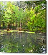 Peacock Springs State Park Canvas Print