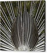 Peacock Tail Graphic Canvas Print