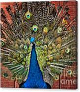 Peacock Tails Canvas Print