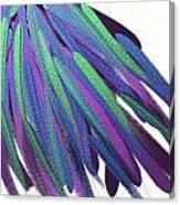 Peacock Wig Canvas Print
