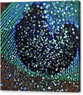 Peacock With Bling Canvas Print