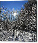 Peaking Sun Canvas Print