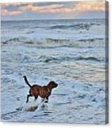 Peanut Faces The Waves Canvas Print