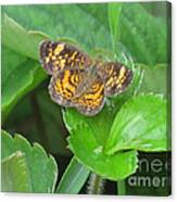 Pearl Crescent Butterfly Canvas Print