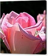 Pearl Pink Petals Canvas Print