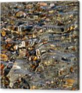 Pebbles And Shells By The Sea Shore Canvas Print
