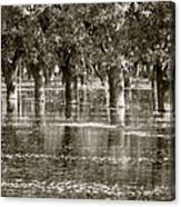 Pecan Trees I Canvas Print