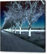 Pecan Trees Canvas Print