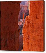 Peek A Boo Trail 3 Canvas Print