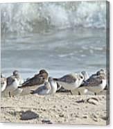 Peeps At The Beach #2 Canvas Print