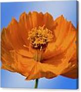 Pefect In Orange Canvas Print