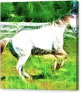 Pegasus Impression Canvas Print