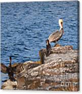 Pelican And Cormorants Canvas Print