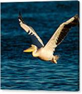 Pelican Brief Canvas Print