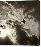 Pelican Fly By Canvas Print