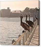 Pelican Gang Canvas Print