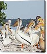 Pelican Island Canvas Print