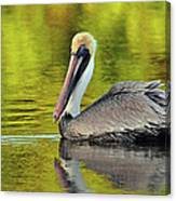 Pelican On A Golden Pond Canvas Print