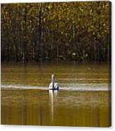 Pelican On Golden Pond Canvas Print