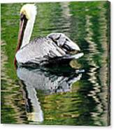 Pelican Reflecting Canvas Print