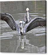 Pelican Span Canvas Print