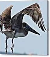 Pelican V Canvas Print