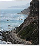 Pelicans Colony Flying Over Cliff Canvas Print