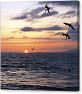 Pelicans Diving At Sunset Canvas Print