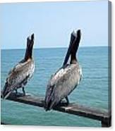 Pelicans On The Pier Canvas Print