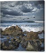Pelicans Over The Surf On Coronado Canvas Print