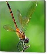 Pennant Dragonfly Obilisking Canvas Print