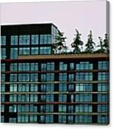 Penthouse Pines Canvas Print