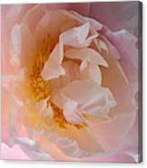 Peony Pink Canvas Print