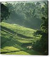 People Walking Through Lujeri Tea Canvas Print