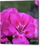 Pepto Pink Canvas Print
