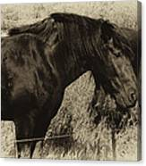 Percheron Prairie Horses Canvas Print
