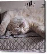 Percy Cat Sleep Stylist Canvas Print