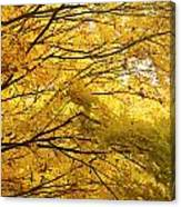 Perfect Autumn Canvas Print