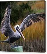 Perfect Pelican Canvas Print