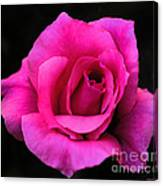 Perfect Rose Canvas Print