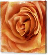 Perfection In Peach Canvas Print